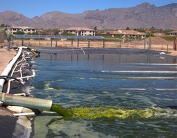 University of Arizona leads $8 million algae research effort | Biomass Magazine | CALS in the News | Scoop.it