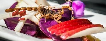 L'entomophagie : une révolution alimentaire | Ma veille sur les sujets qui me passionnent | Scoop.it