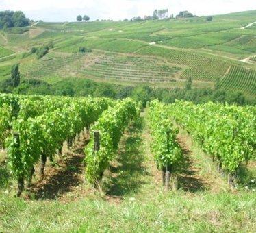 Du jamais vu : hausse de 3,6% du prix du foncier viticole   Le vin quotidien   Scoop.it