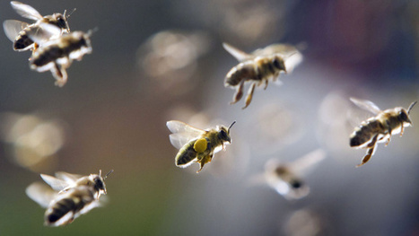 Oregon Pesticide Company Fined For Killing Thousands Of Bees - CBS Local   Help Save Our Beautiful Bees and Wildlife.Together we can make a difference.   Scoop.it