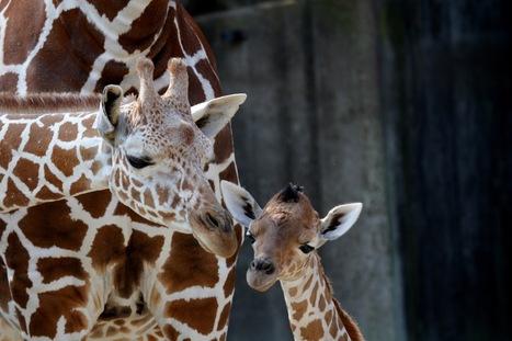Le Brésil prévoit de cloner les animaux en voie de disparition | Ecologie Animale | Scoop.it