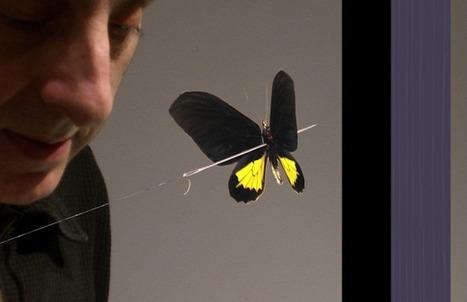 « De l'art de se voiler la face » : Réconcilier Homme et Nature | Nouveaux comportements & accompagnement aux changements | Scoop.it