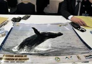 Whaling Dispute between Australia and Japan to End in 2013 | French Tribune | International Court of Justice | Scoop.it