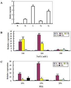 PLOS ONE: The Maize AAA-Type Protein SKD1 Confers Enhanced Salt and Drought Stress Tolerance in Transgenic Tobacco by Interacting with Lyst-Interacting Protein 5 | Biotechnology | Scoop.it