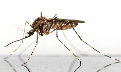 CNA: ¿Peligro mortal o alarmismo social? - Eugenesia: el verdadero objetivo del virus Zika | La R-Evolución de ARMAK | Scoop.it