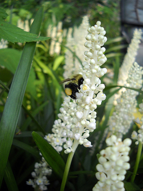 Get in the Garden | Annie Haven | Haven Brand | Scoop.it