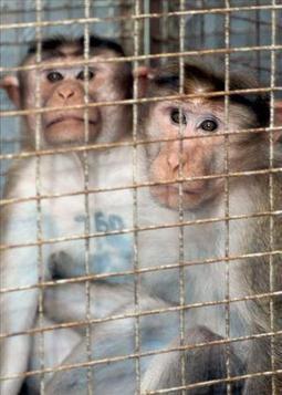 Una nueva ley protegerá a los animales de la experimentación científica | experimentación con animales | Scoop.it