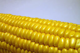 On hold! Opposition slows Dow's 2,4-D corn | Pesticide Action Network | YOUR FOOD, YOUR ENVIRONMENT, YOUR HEALTH: #Biotech #GMOs #Pesticides #Chemicals #FactoryFarms #CAFOs #BigFood | Scoop.it