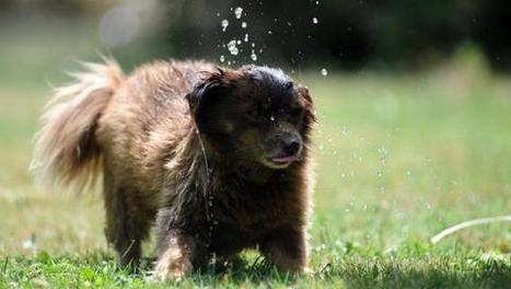 Legambiente, ancora pochi servizi per Fido in città | Benessere animale | Scoop.it