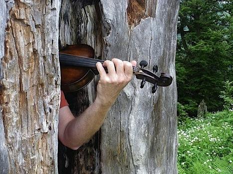 Musique et Nature - L'éveil des sons   DESARTSONNANTS - CRÉATION SONORE ET ENVIRONNEMENT - ENVIRONMENTAL SOUND ART - PAYSAGES ET ECOLOGIE SONORE   Scoop.it