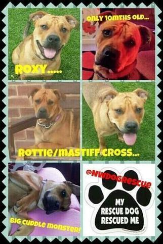 Twitter / NWDogRescue: Need to run, new dogs to sort, ... | Animal rights | Scoop.it