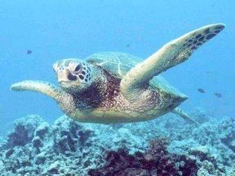 Casi 15.000 tortugas anidan en el Pacífico nicaraguense - EFEverde, el periodismo del medio ambiente | EFEverde | Scoop.it
