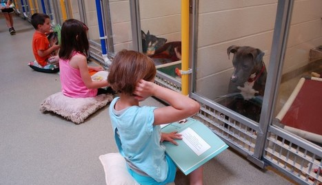 Something Truly Beautiful Is Happening At This Animal Shelter | Visual*~*Revolution | Scoop.it
