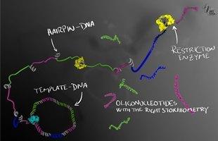 New method of mass-producing highest-quality oligonucleotides enzymatically | Amazing Science | Scoop.it