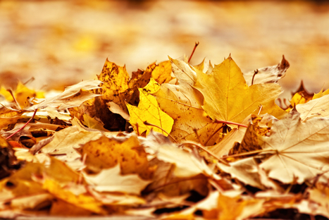 How To Use Falling Leaves For A Great Garden Next Year | Gardening | Scoop.it