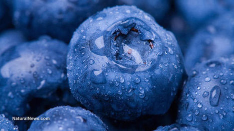 Suggested foods for diabetics: Top 10 list | The Basic Life | Scoop.it