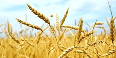 La Daf et la Direction achats à égalité : l'exemple de Grimaud sur le contrôle des prix des céréales   L'UNIVERS ALPHA OMEGA   Scoop.it