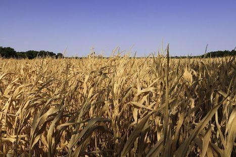 Pour nourrir 9 milliards d'humains, il faudra digitaliser la filière agroalimentaire   Ecologie   Scoop.it