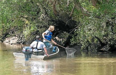Les poissons morts retirés du fleuve de la Leyre - 20 Minutes | Aquariophilie | Scoop.it