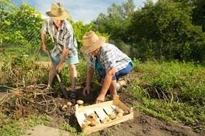 Waarom Je Organische Groenten Zou Moeten Kopen - Arganwinkel.nl | Verantwoord eten | Scoop.it