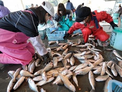 [Photo] Dernière pêche avant les restrictions | Daylife-Getty Images | Japon : séisme, tsunami & conséquences | Scoop.it