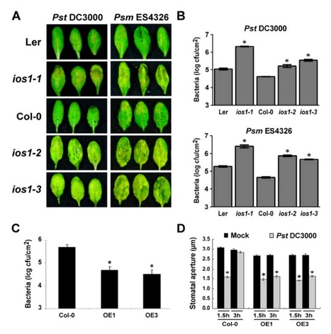 The Arabidopsis Malectin-Like/LRR-RLK IOS1 is Critical for BAK1-Dependent and BAK1-Independent Pattern-Triggered Immunity   microbial pathogenesis and plant immunity   Scoop.it
