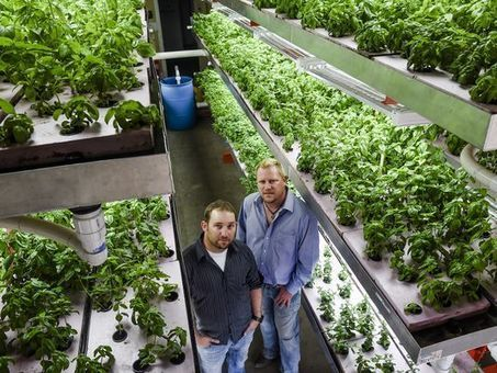 Fort Collins pair grow aquaponic farming - The Coloradoan | Aquaponics in Action | Scoop.it