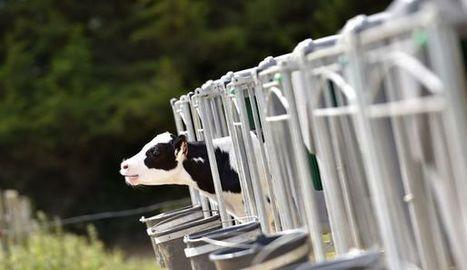 Le prix du lait, complexe à fixer et soumis au marché mondial - L'Express / L'Expansion | Le Fil @gricole | Scoop.it
