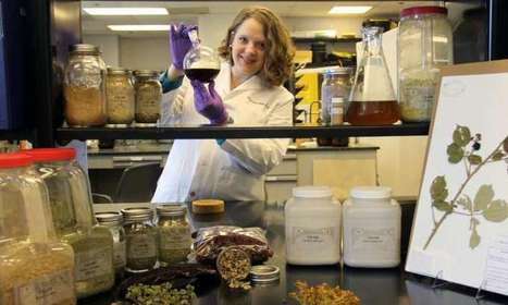 Chestnut leaves yield extract that disarms deadly staph bacteria | my universe | Scoop.it
