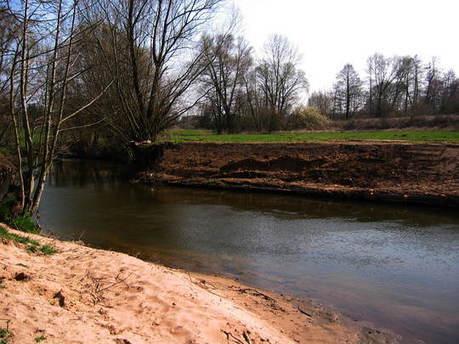 Précieuses forêts riveraines : les ripisylves -Menaces et mesures de protection | Biodiversité | Scoop.it
