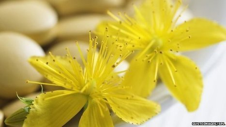 St John's wort blights contraceptive | Mental Wellbeing | Scoop.it