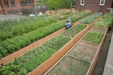 Tenth Acre Farms: An Abandoned Brooklyn Basketball Court Transformed into a Lush Green Space | Inhabitat New York City | ECONOMIES LOCALES VIVANTES | Scoop.it