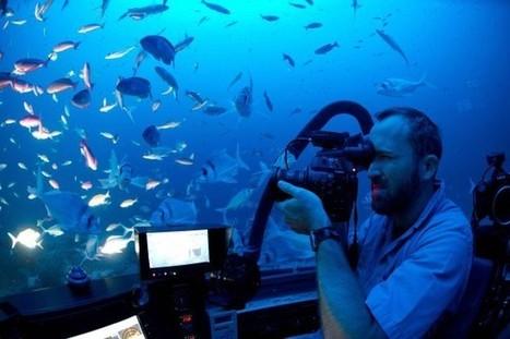 Desventuradas Expedition: Bizarre and Wonderful Sub Dive - National Geographic | Adventurous Lives | Scoop.it