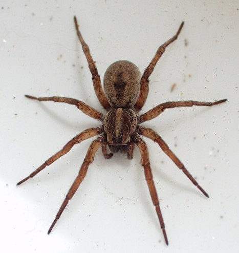 Arachnophobia - Why We Are Scared of Spiders   pest control   Scoop.it