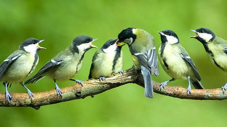 Evolución de las especies versus cambio climático - BBC Mundo - Noticias | Noticias 2º Trimestre CMC | Scoop.it