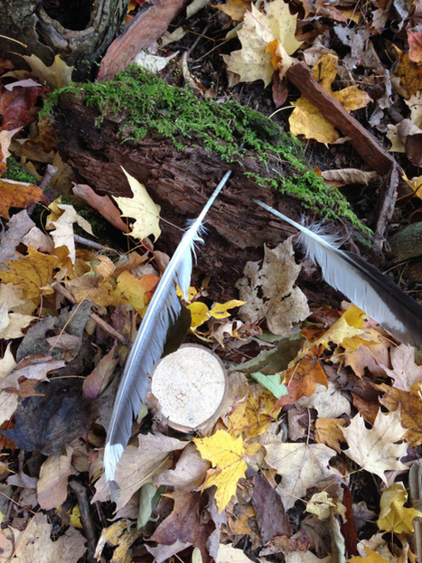 Loose parts in nature inform Reggio inspired learning | Outdoor Early Learning | Scoop.it