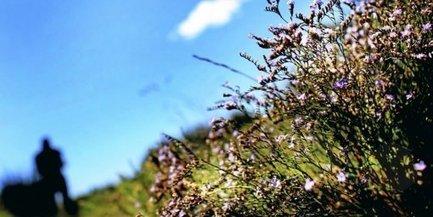 CAMARGUE: Saladelle, soude et salinelle trois plantes du sel et du soleil | Tourisme en Provence Pays d'Arles | Scoop.it
