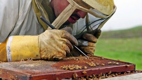 Scientists discover what's killing bees | Ecology news, upcycling & recycling | Scoop.it