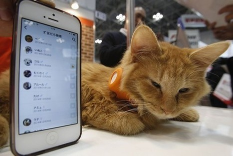 Wearable Technology Going to the Cats and Dogs | Event Social Media & Technology | Scoop.it