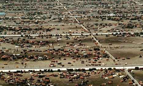 Tim Benton quote: Giving up beef will reduce carbon footprint more than cars, says expert | BIOSCIENCE NEWS | Scoop.it