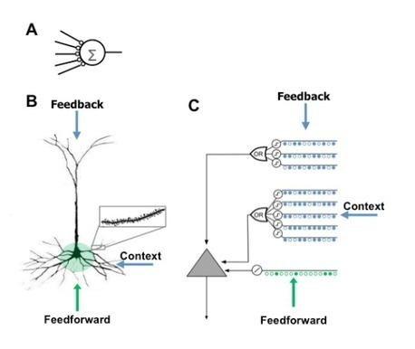 Single Artificial Neuron Taught to Recognize Hundreds of Patterns | MIT Technology Review | The virtual life | Scoop.it