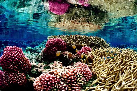 Les poissons des îles du Pacifique, une ressource menacée par le climat | Toxique, soyons vigilant ! | Scoop.it