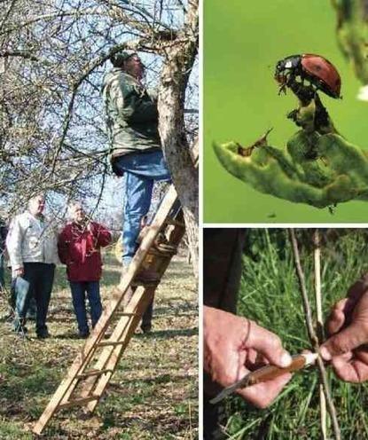 MORVAN : 3 stages annoncés pour l'entretien et la taille des arbres | Le fruit de l'actualité | Scoop.it