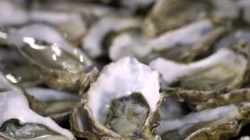Les ostréiculteurs du monde entier sur le Bassin d'Arcachon - France 3 Aquitaine | BIENVENUE EN AQUITAINE | Scoop.it