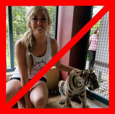 Kalli Fullerton thoughts & insights: Being Part of the Problem: Tiger Tourism | Tiger Tourism - Don't Pay to Play | Scoop.it