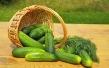 15 Health Benefits of Cucumbers: Grow Your Own Cooling Food | Green Consumer Forum | Scoop.it