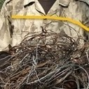 Poachers' Snares: The Race to get there First! | Wildlife Trafficking: Who Does it? Allows it? | Scoop.it