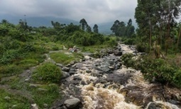 Democratic Republic of Congo wants to open up Virunga national park to oil exploration | Biodiversity | Scoop.it