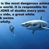 La Réunion : Encore de l'argent sur le dos des requins...More money on the backs of sharks ...