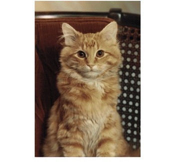 8 Library Cats « UTM Library Blog   Library Cats   Scoop.it